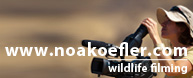 Noa Koefler Wildlife Filming